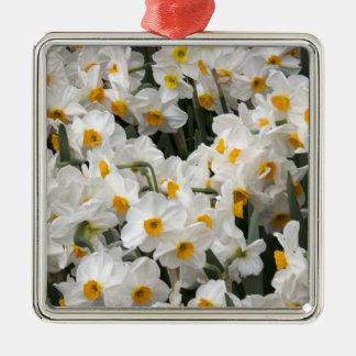 WA, Skagit Valley, Daffodil pattern Metal Ornament