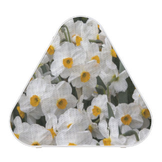 WA, Skagit Valley, Daffodil pattern Speaker