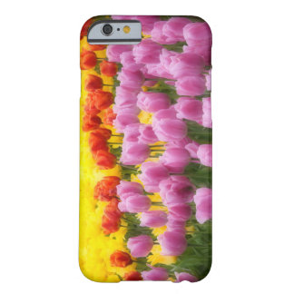 WA, Skagit Valley, Roozengaarde Tulip Garden, 2 Barely There iPhone 6 Case