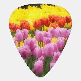 WA, Skagit Valley, Roozengaarde Tulip Garden, 2 Guitar Pick