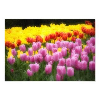WA, Skagit Valley, Roozengaarde Tulip Garden, 2 Photographic Print