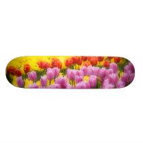 WA, Skagit Valley, Roozengaarde Tulip Garden, 2 Skateboard