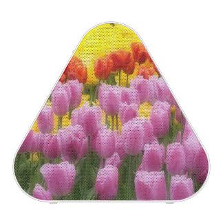 WA, Skagit Valley, Roozengaarde Tulip Garden, 2 Speaker