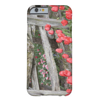 WA, Skagit Valley, Roozengaarde Tulip Garden, Barely There iPhone 6 Case