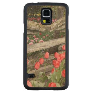 WA, Skagit Valley, Roozengaarde Tulip Garden, Carved Maple Galaxy S5 Slim Case