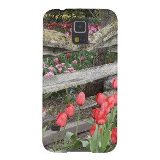 WA, Skagit Valley, Roozengaarde Tulip Garden, Case For Galaxy S5