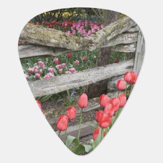 WA, Skagit Valley, Roozengaarde Tulip Garden, Guitar Pick