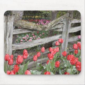 WA Skagit Valley Roozengaarde Tulip Garden Mousepads