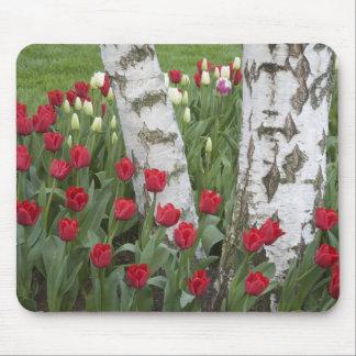 WA Skagit Valley Roozengaarde Tulip Garden Mouse Pads