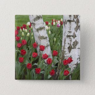 WA, Skagit Valley, Roozengaarde Tulip Garden Pinback Button