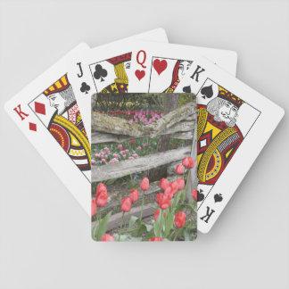 WA, Skagit Valley, Roozengaarde Tulip Garden, Playing Cards