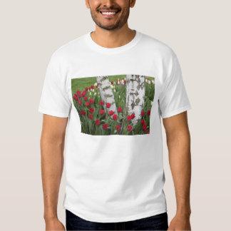 WA, Skagit Valley, Roozengaarde Tulip Garden T Shirt