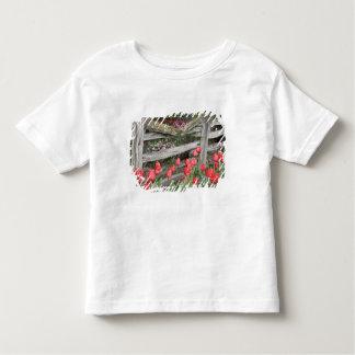 WA, Skagit Valley, Roozengaarde Tulip Garden, Tee Shirt