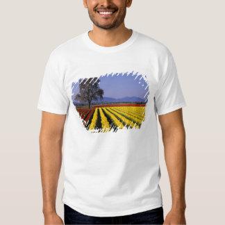 WA, Skagit Valley, Skagit Valley Tulip 2 Shirt