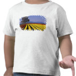 WA, Skagit Valley, Skagit Valley Tulip 2 Shirts