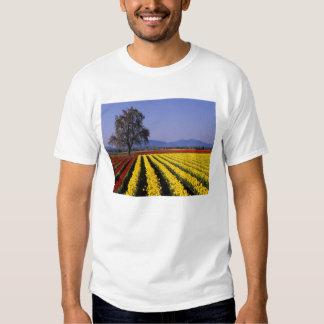 WA, Skagit Valley, Skagit Valley Tulip 2 T Shirt