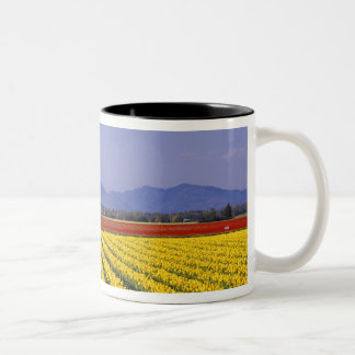 WA, Skagit Valley, Skagit Valley Tulip 2 Two-Tone Coffee Mug