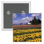 WA, Skagit Valley, Skagit Valley Tulip 2 Inch Square Button