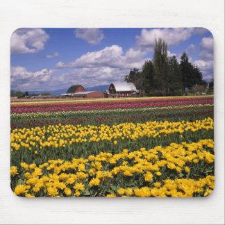 WA Skagit Valley Skagit Valley Tulip Mousepad