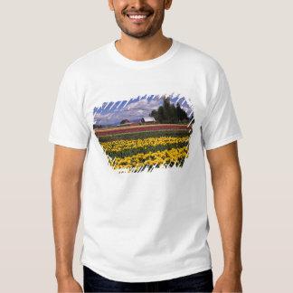 WA, Skagit Valley, Skagit Valley Tulip T-shirt