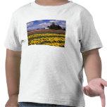 WA, Skagit Valley, Skagit Valley Tulip T Shirts