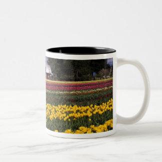 WA, Skagit Valley, Skagit Valley Tulip Two-Tone Coffee Mug