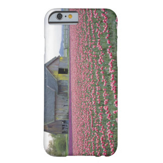 WA, Skagit Valley, Tulip Field and Barn Barely There iPhone 6 Case