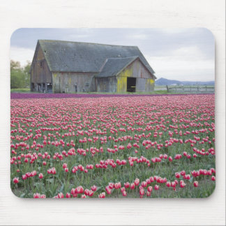 WA Skagit Valley Tulip Field and Barn Mousepads