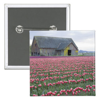 WA, Skagit Valley, Tulip Field and Barn Pinback Button