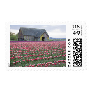 WA, Skagit Valley, Tulip Field and Barn Postage