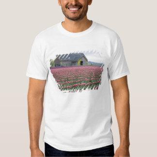 WA, Skagit Valley, Tulip Field and Barn T Shirt