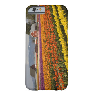 WA, Skagit Valley, Tulip fields in bloom, at Barely There iPhone 6 Case