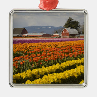 WA, Skagit Valley, Tulip fields in bloom, at Metal Ornament