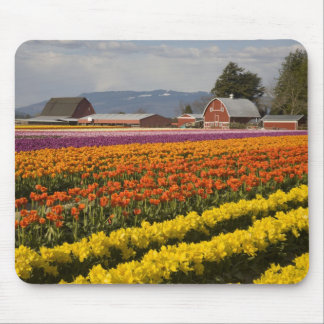 WA Skagit Valley Tulip fields in bloom at Mouse Pad