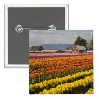 WA, Skagit Valley, Tulip fields in bloom, at Pinback Button