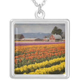 WA, Skagit Valley, Tulip fields in bloom, at Silver Plated Necklace