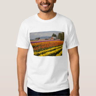 WA, Skagit Valley, Tulip fields in bloom, at Tee Shirt