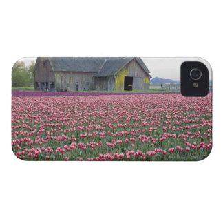 WA, valle de Skagit, campo del tulipán y granero Case-Mate iPhone 4 Cárcasas