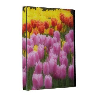 WA, valle de Skagit, jardín del tulipán de Roozeng