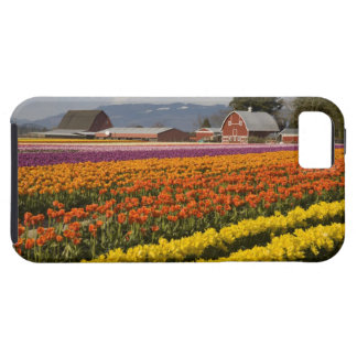 WA valle de Skagit tulipán coloca en la floració iPhone 5 Cárcasa