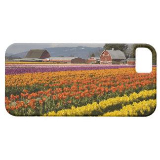 WA valle de Skagit tulipán coloca en la floració iPhone 5 Case-Mate Carcasas