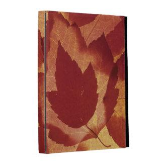 WA, Wenatchee National Forest, Maple leaf iPad Folio Case