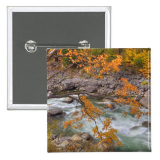 WA, Wenatchee National Forest, Maple tree and 2 Inch Square Button