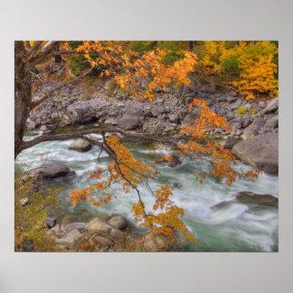 WA Wenatchee National Forest Maple tree and Print