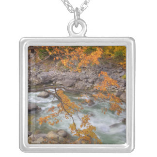 WA, Wenatchee National Forest, Maple tree and Silver Plated Necklace