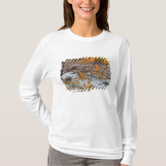 WA, Wenatchee National Forest, Maple tree and T-Shirt