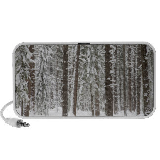 WA, Wenatchee National Forest, Ponderosa Pine 2 Travel Speaker