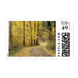 WA, Wenatchee National Forest, road through Postage