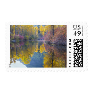 WA, Wenatchee National Forest, Whitepine Creek, Postage