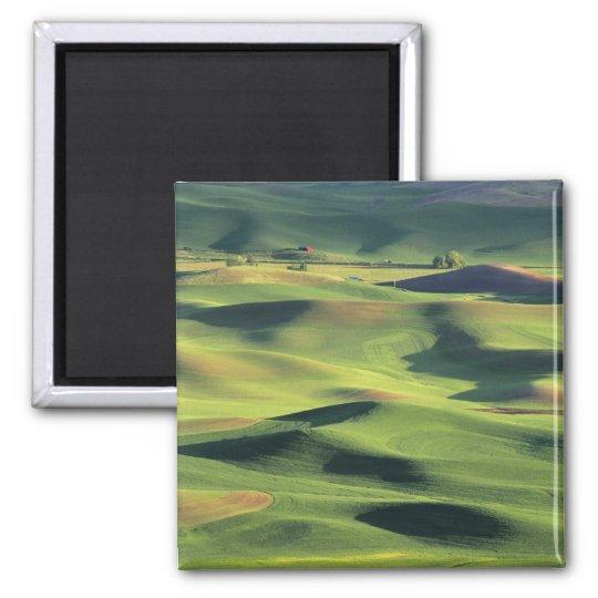 WA, Whitman County, Palouse Farmland, view Magnet